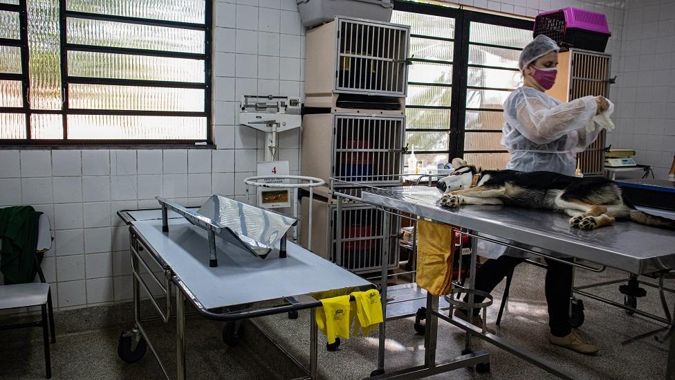 Zoonoses realiza castração de cães e gatos que estão na fila de espera