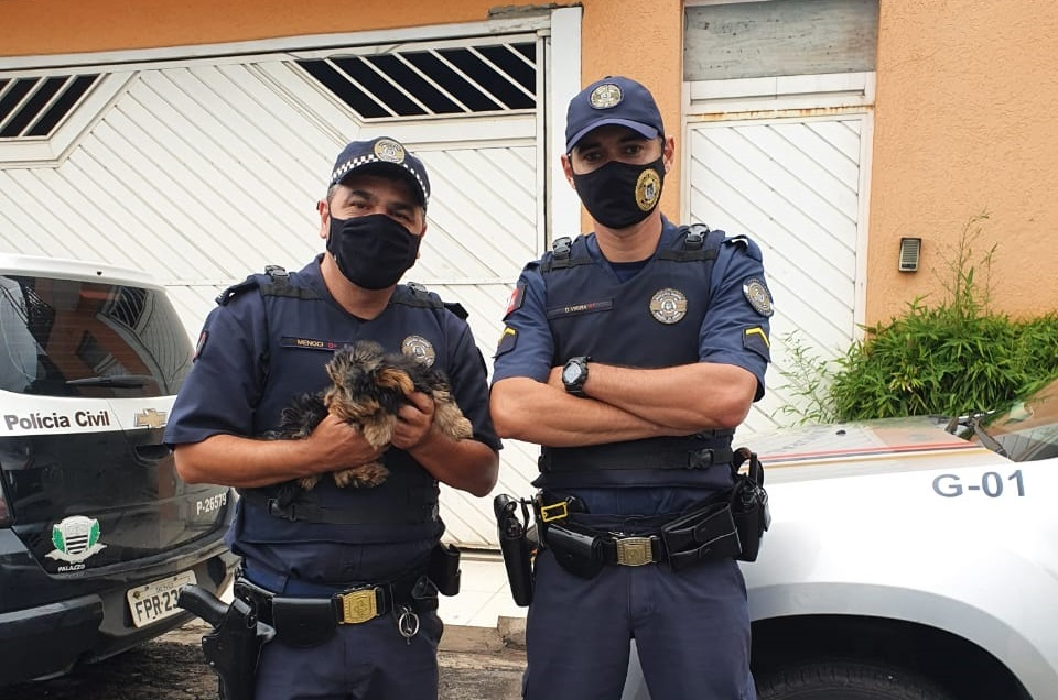 GCM e Investigadores do 2º DP de Taboão recuperam cachorrinha