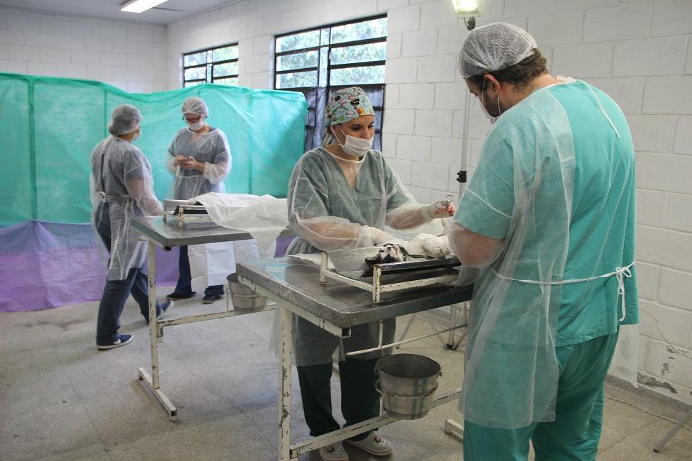 Mutirão de Castração realizou 151 procedimentos em cães e gatos do município