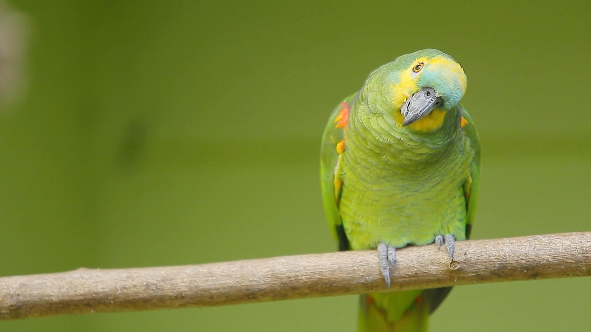 Papagaio-verdadeiro é eleito mascote da Escola Livre de Educação Ambiental